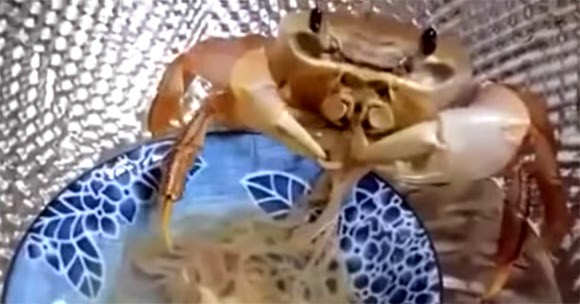 VIDEO KETAM PANDAI MAKAN MEE GORENG PAKAI TANGAN