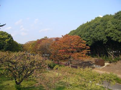万博公園 紅葉のきざし
