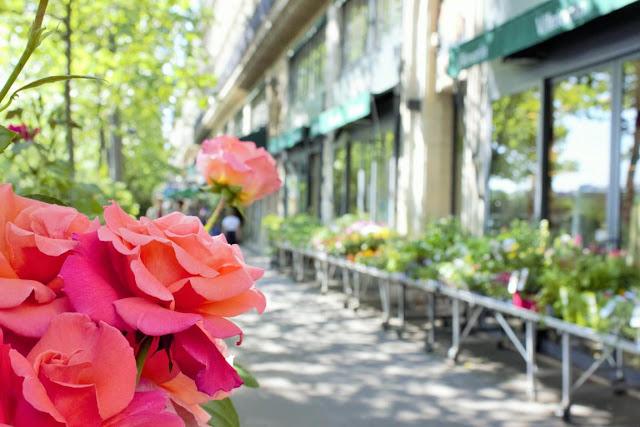 Paris travel spring