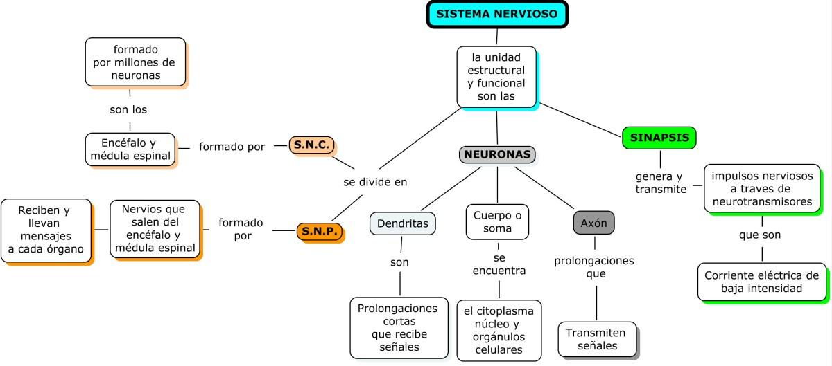 SISTEMA NERVIOSO Y ENDOCRINO: TEMA 5 SISTEMA NERVIOSO Y ENDOCRINO