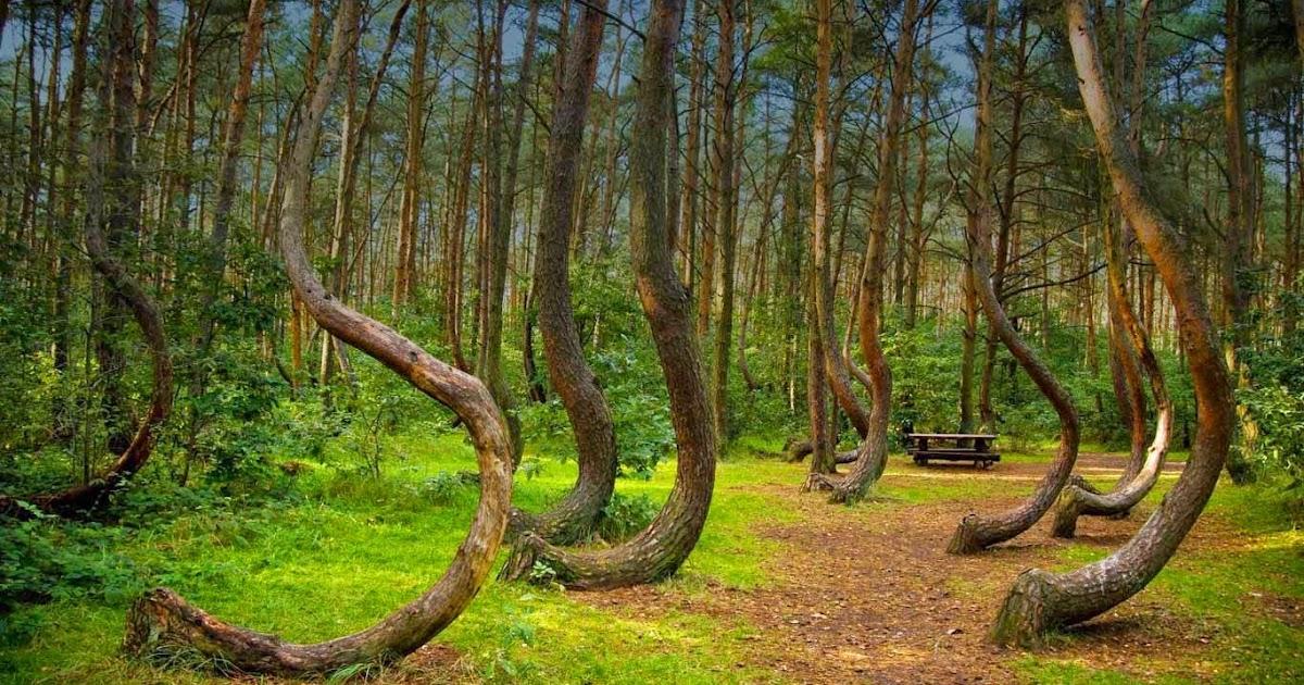 Misteri Hutan Hoia Baciu Gerbang M K Alien Dan Alam Ghaib