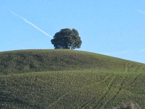 http://tangalor.blogspot.it/2013/12/ma-oggi-pianta-un-albero.html