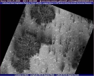 Extrañas fotografías de Marte - árboles y vegetación
