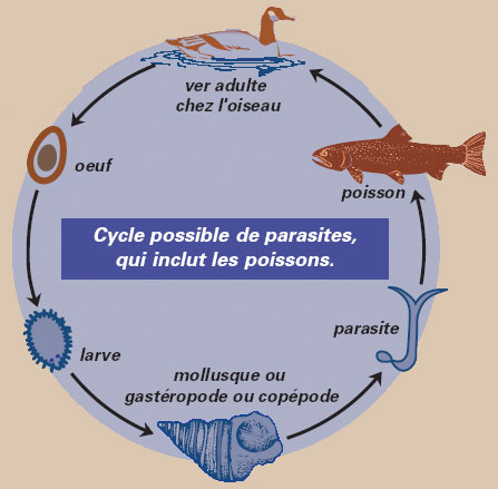 Que lon peut boire pour la prophylaxie des parasites