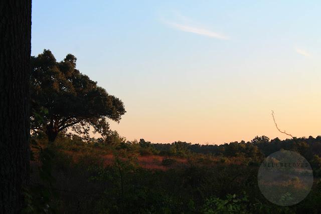 Missouri sunrise and field