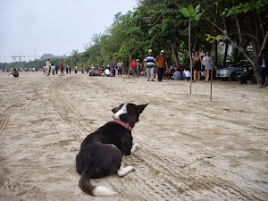 KOOPA ON KUTA BEACH, BALI