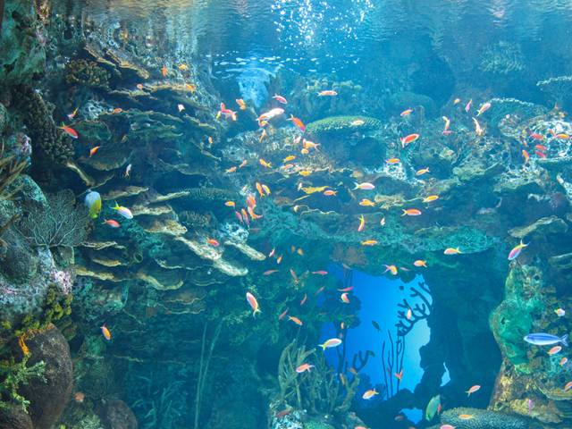 World Largest Aquarium in Georgia