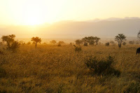 African Savannah. An international study shows that semi-arid ecosystems--savannahs and shrublands--play an extremely important role in controlling carbon sinks and the climate-mitigating ecosystem service they represent. (Credit:  © tellmemore / Fotolia) Click to enlarge.