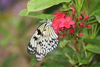 pretty butterfly on red flower