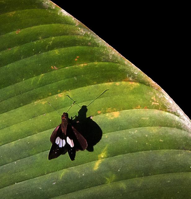 macro, shadows,butterfly, leaf