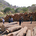 Estados/ Profepa suspende tala de árboles en comunidades de Guerrero