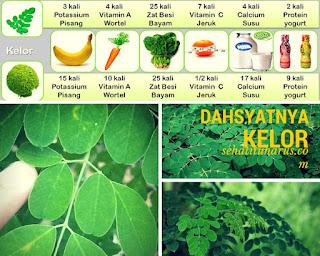 1001 Manfaat daun kelor untuk kesehatan
