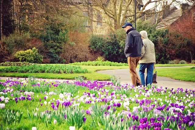 Sheffield in bloom
