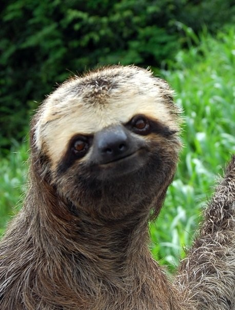 Reservation For One Positive Sloth