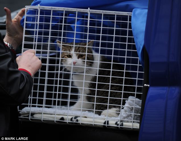 Downing Street had a new cat. Not just any cat, either.