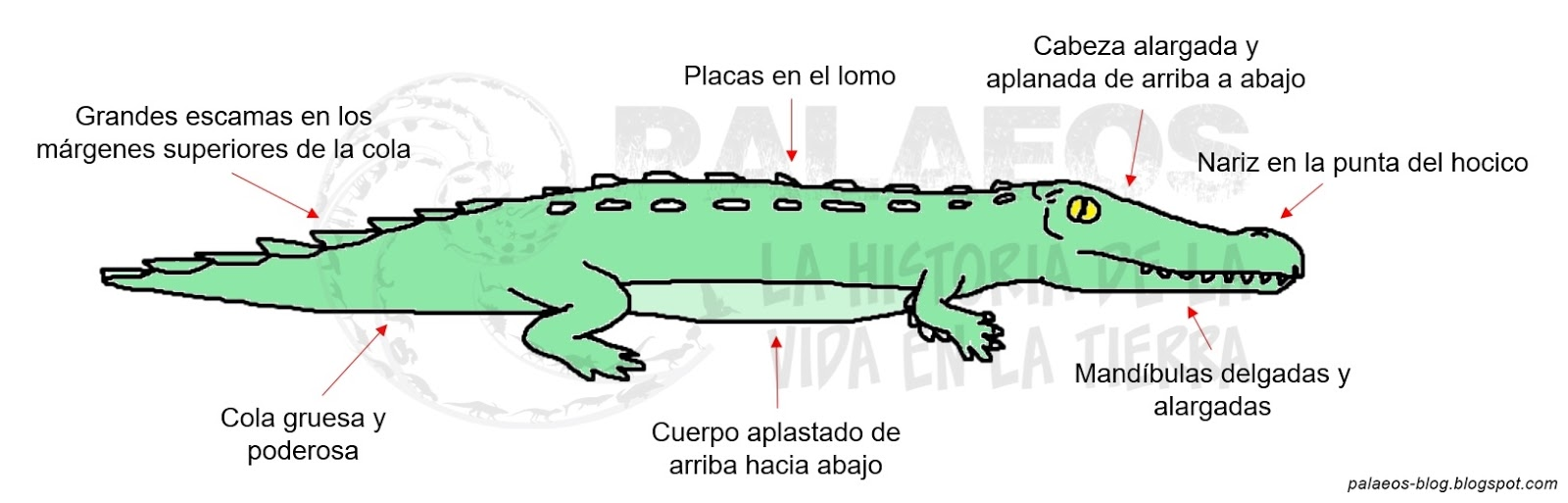 Palaeos, la historia de la Vida en la Tierra: Pobres cocodrilos