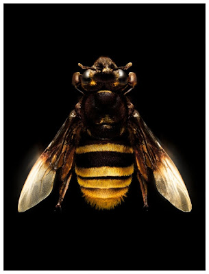 animal digital art - animal photography - bugs digital art