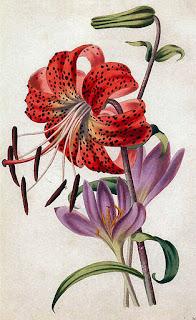 flores vintage rojas