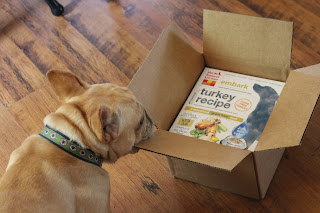 french bulldog Louie gets a box of dog food in the mail from The Honest Kitchen