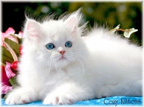 Les plus belles photos de chats mignons