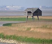 Foto cover Economische en ecologische perspectieven van een dubbele dijk langs de Eems-Dollard