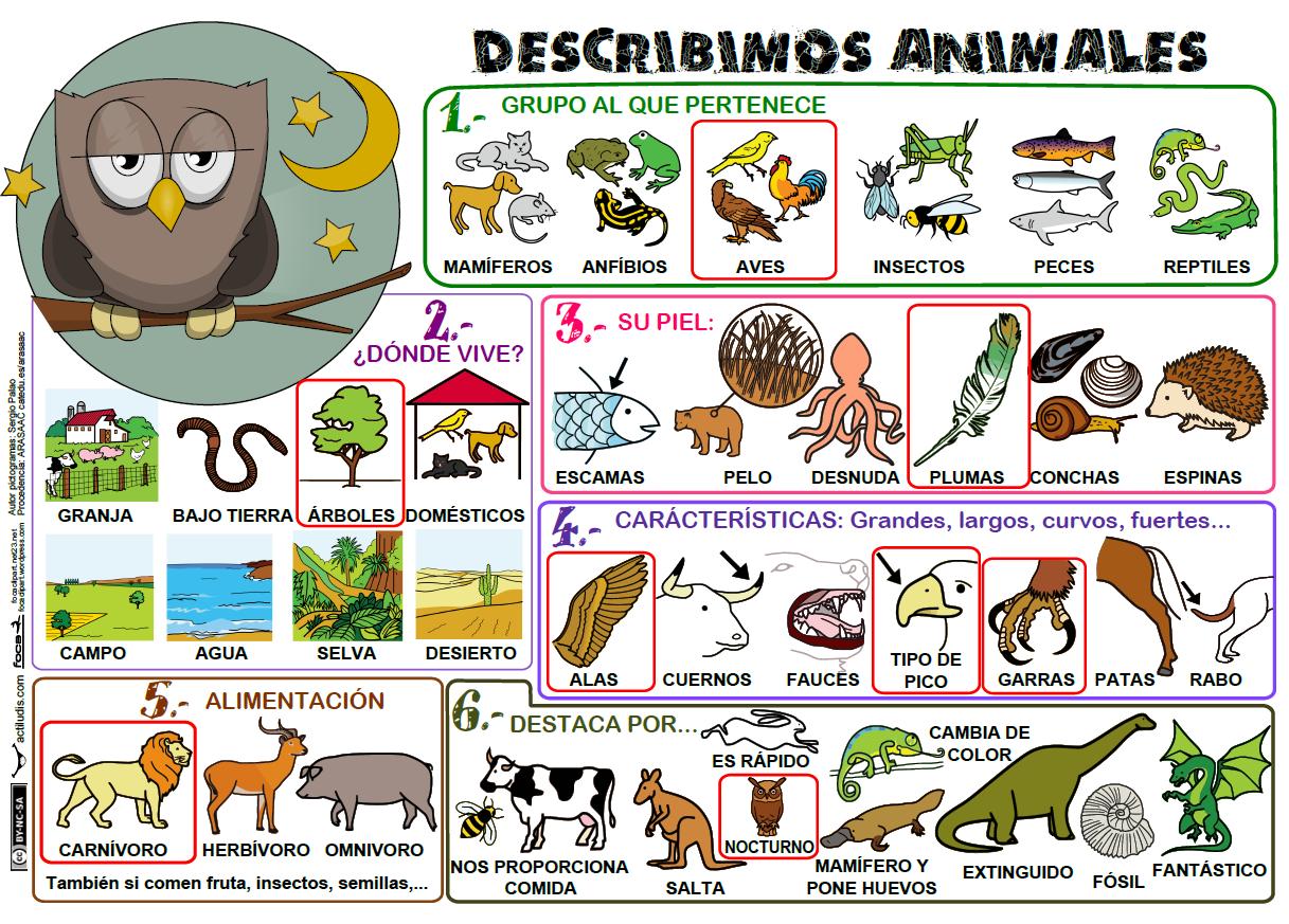 El casillero de Mila: Describir animales