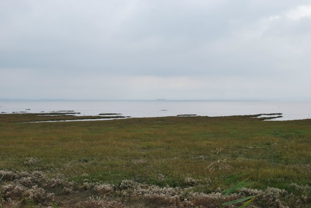 View of estuary from wetlands path