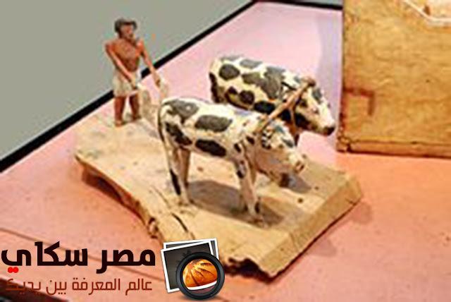 أهم العوامل التى شجعت على الزراعة فى مصر الفرعونية