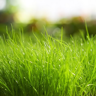 Fresh grass Spring download free wallpapers for Apple iPad
