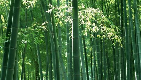 Legenda Hantu Bambu Hijau Dari Riau