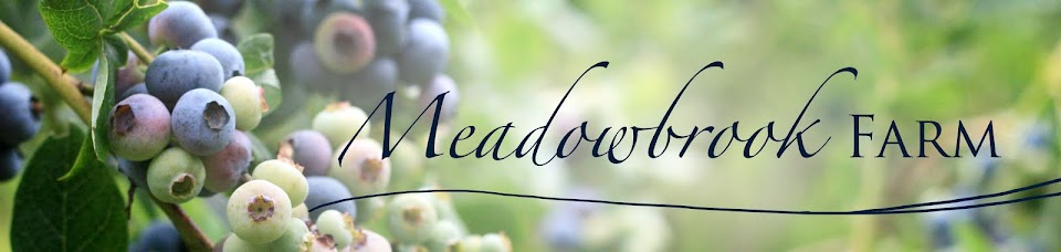 Meadowbrook Farmily