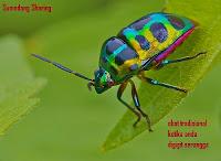 Obat Tradisional Digigit Serangga