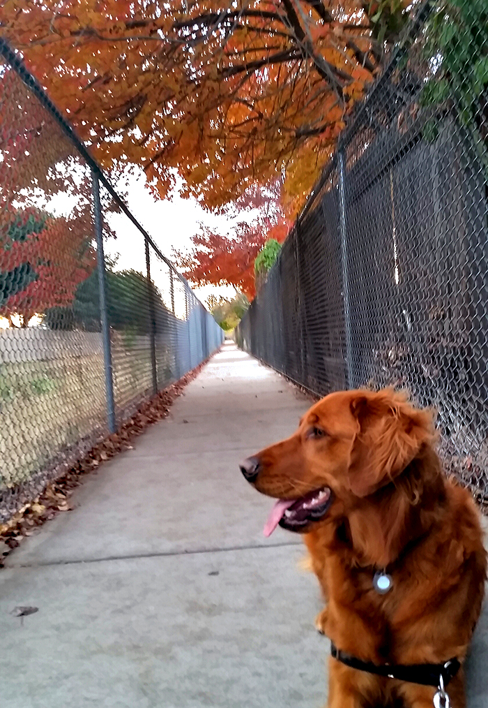 walking the dog in the fall