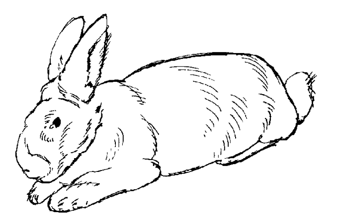 صورة أرنب للتلوين
