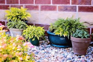https://pixabay.com/en/plants-in-pots-summer-green-818718/