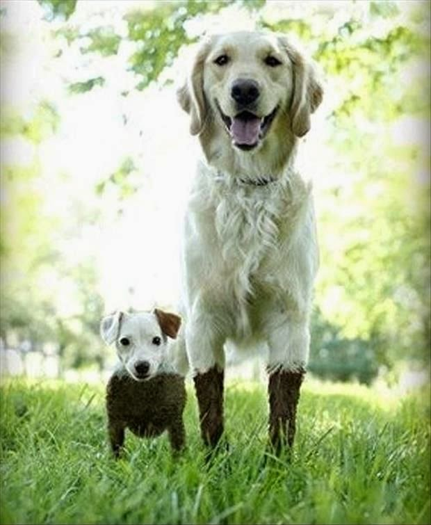 See more Big dogs Wonder if the big dog had to go into the mud to save the little dog who looks like he was in neck deep.