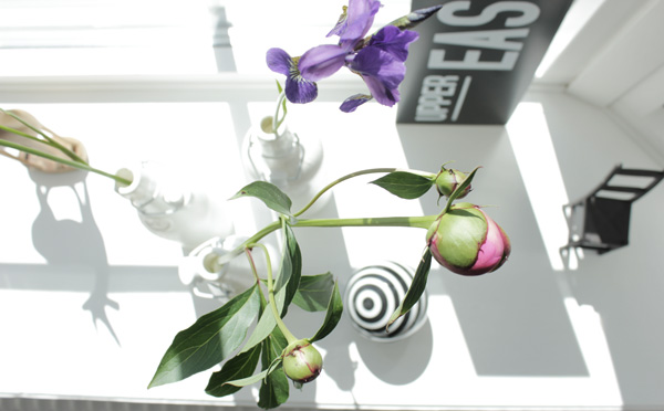 pioner och lila blommor från trädgården, fint i fönstret, diy med blommor, vita flaskor som vaser, lila blommor med lång stjälk