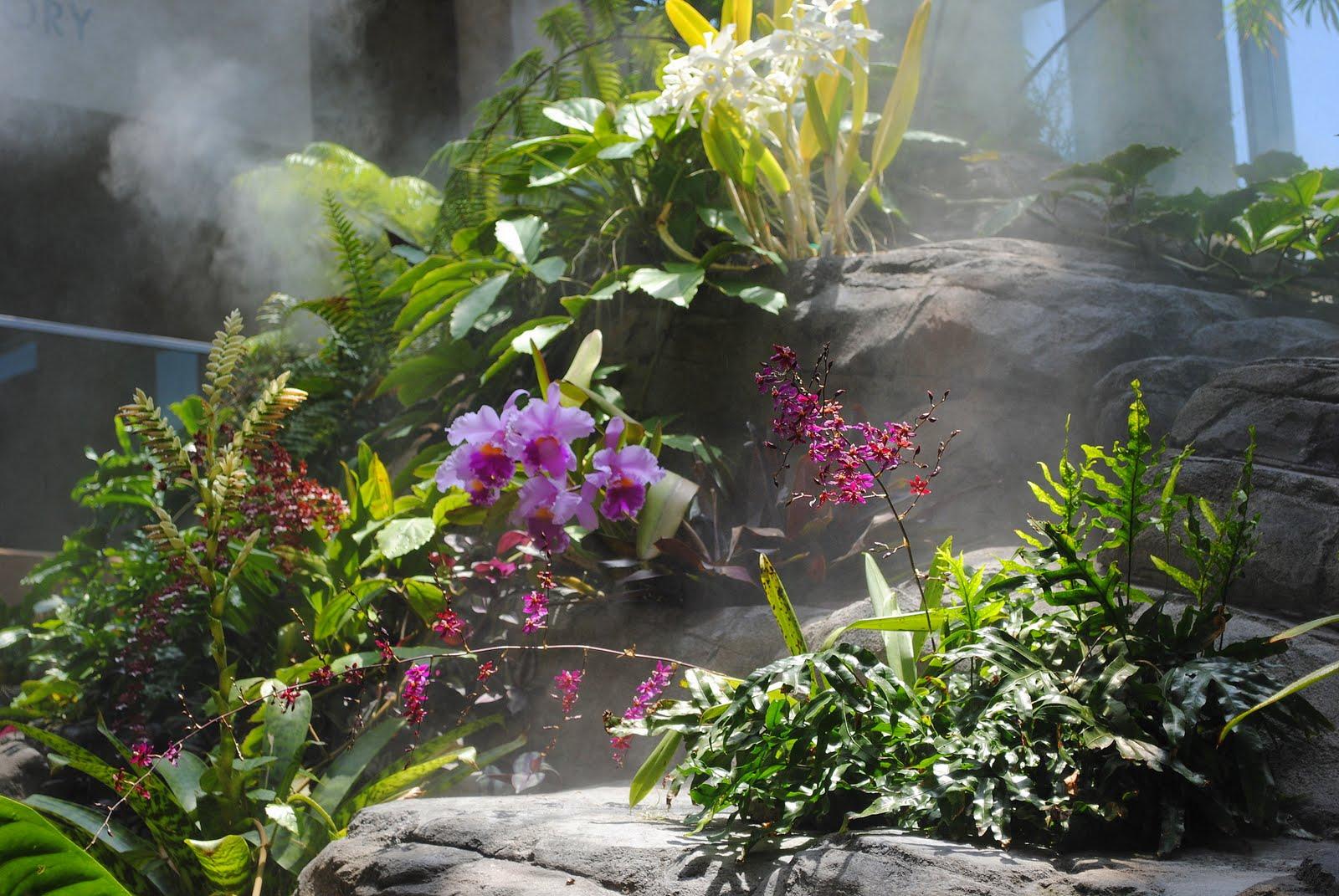 Mountain Mermaid: Denver Botanical Gardens: The Atrium