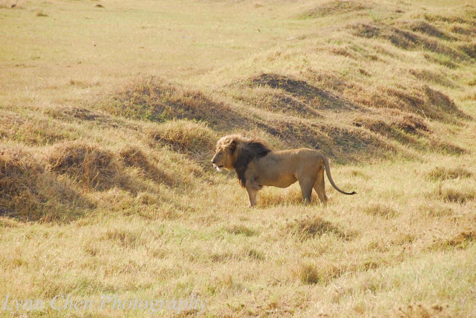 http://2.bp.blogspot.com/-KKRtH3inzQQ/TvGYglYZ6CI/AAAAAAAAAqs/yCkVjOAYJY0/s1600/LR+Ngorongoro-094.jpg