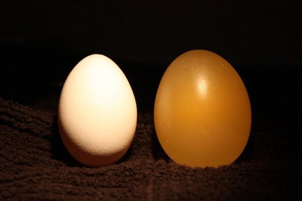 هل رأيت من قبل بيضة عارية - 11