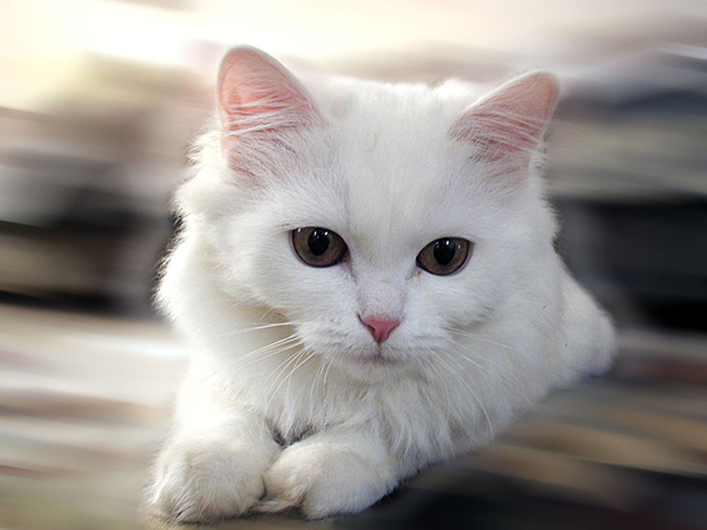 HD Animals: cute puppies and kittens wallpaper