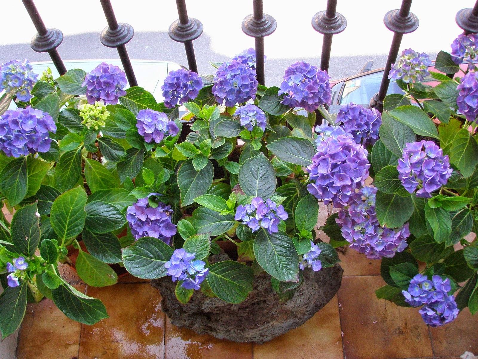 Como decorar tu terraza que tipo de plantas poner en el for Plantas en balcones y terrazas