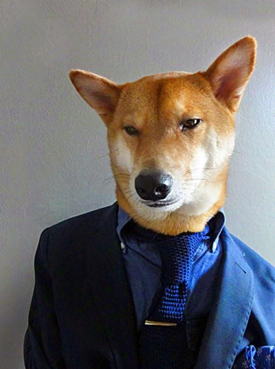 يلبس الكلب بدلة زرقاء