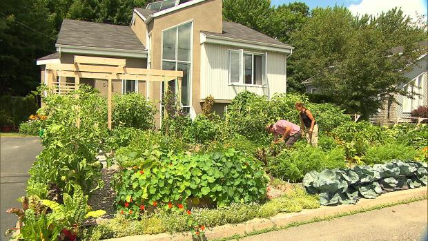 Matt Of All Trades Quebec Town Hates Front Yard Garden Why