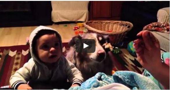 فيديو غريب و مضحك. كلب ينطق ماما مكان رضيع