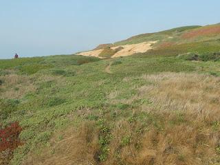 bodega head hiking trail