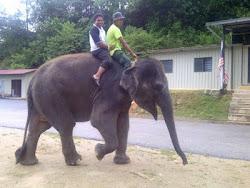 gajah adalah pengankutan rasmi FII