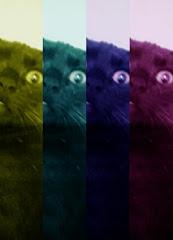 Tumblr Mundo de Gato