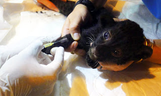 Panther Cub Recovering