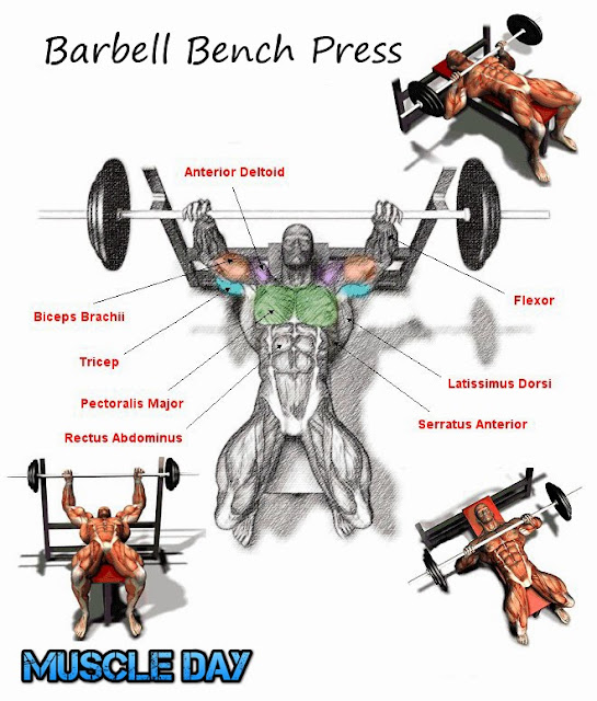 Chest Exercises - Barbell Bench Press | Muscle Day